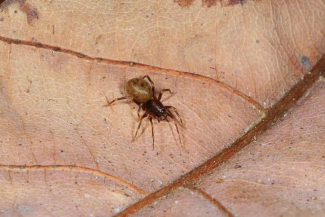 This Spider From New Zealand Has Lightening Fast Jaws And Its F*cking Terrifying High speed new species F