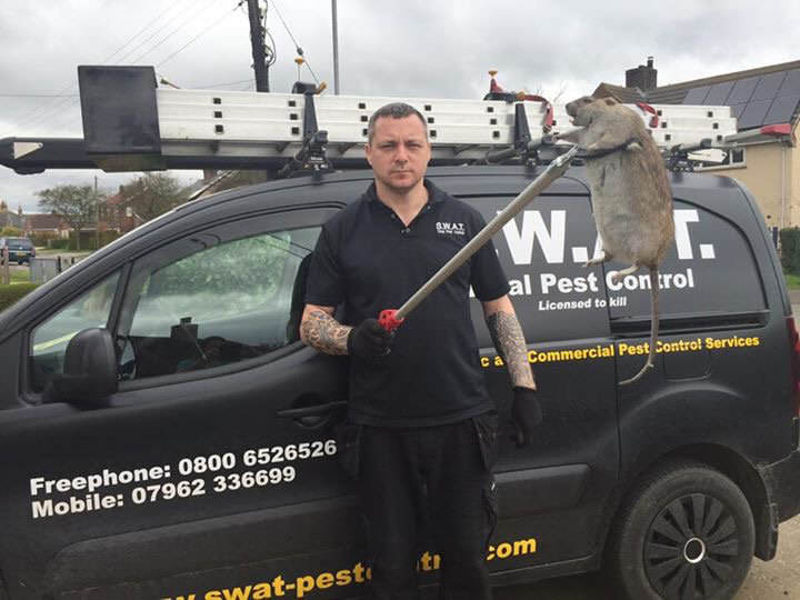 NOPE: Another Giant Super Rat Was Just Found In The UK SWNS RAT 03
