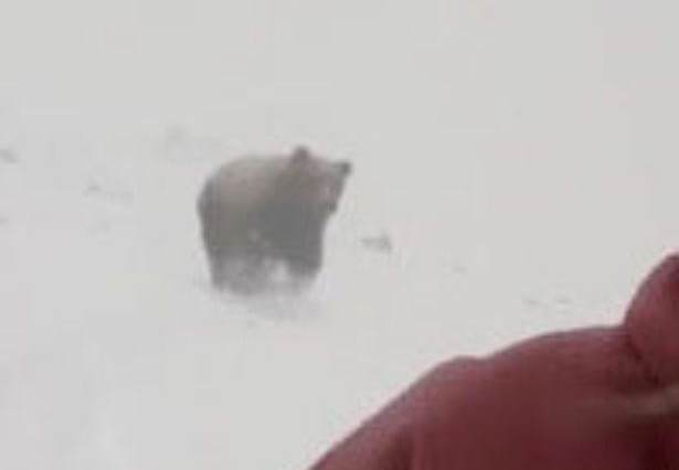 Theres Been A Plot Twist In The Snowboarder Chased By Bear Story bear3