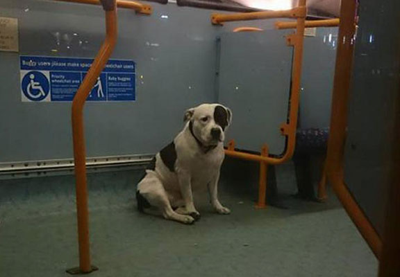 Can I Take A Dog On The Bus London