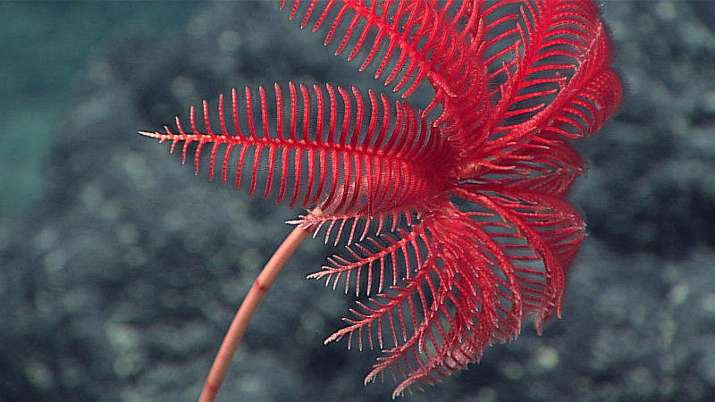 These Photos From The Deepest Depths Of The Ocean Are Mind Blowing alsgclrpqrqr8tpwna2f