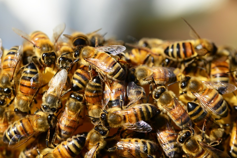 NOPE: 20,000 Bees Chase Car After Queen Bee Stuck In Boot bees 1