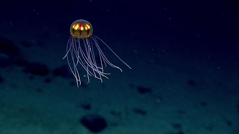 These Photos From The Deepest Depths Of The Ocean Are Mind Blowing c8rihlbdzjwppc5wphpl