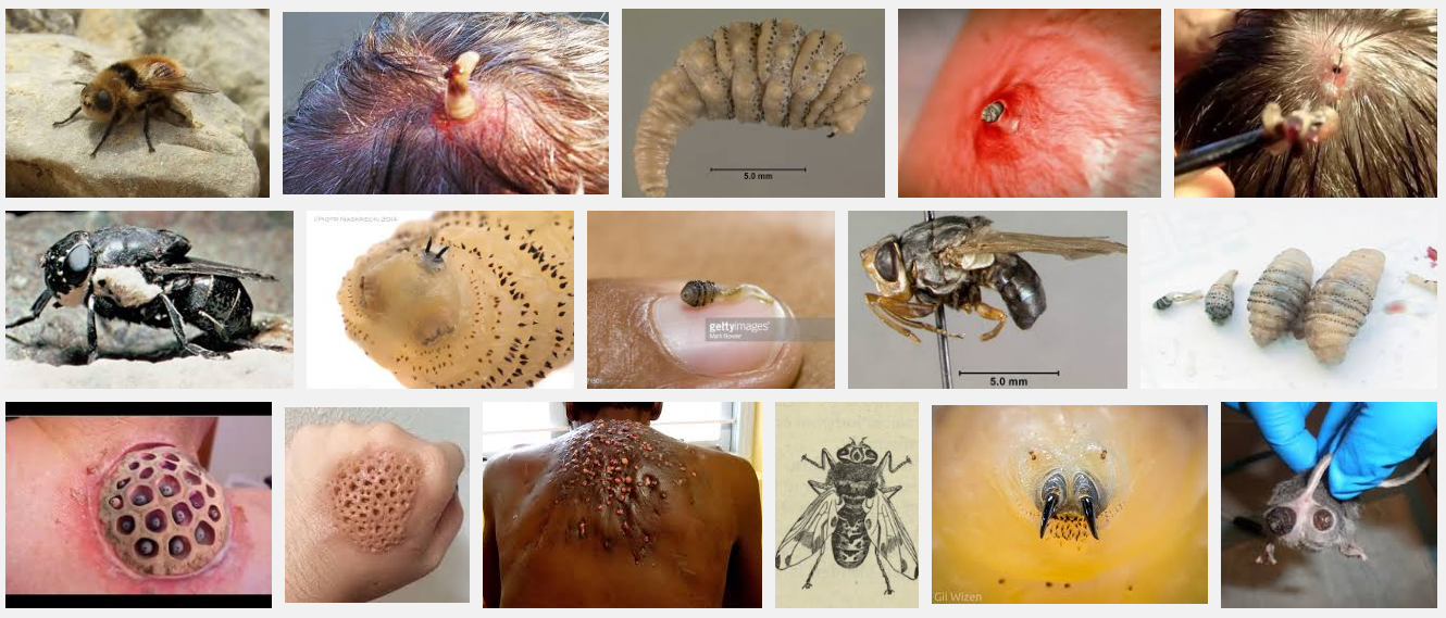 Heres Five F*cked Up Things You Should Definitely Avoid Googling mouth larva 1