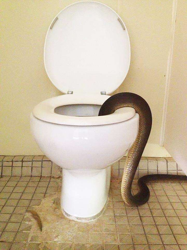NOPE: These Photos Will Put You Off Using Toilet Forever snake1 1