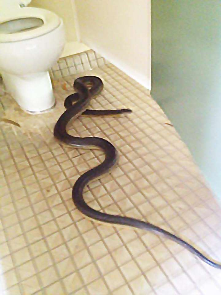 NOPE: These Photos Will Put You Off Using Toilet Forever snake4
