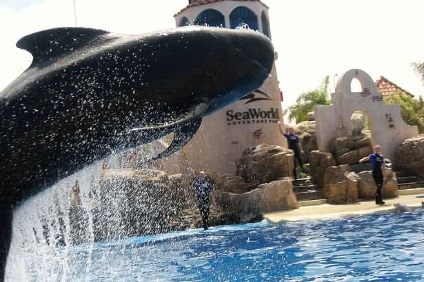 Death of Bubbles The Whale At SeaWorld Sparks Outrage Online Bubbles Seaworlds pilot whale