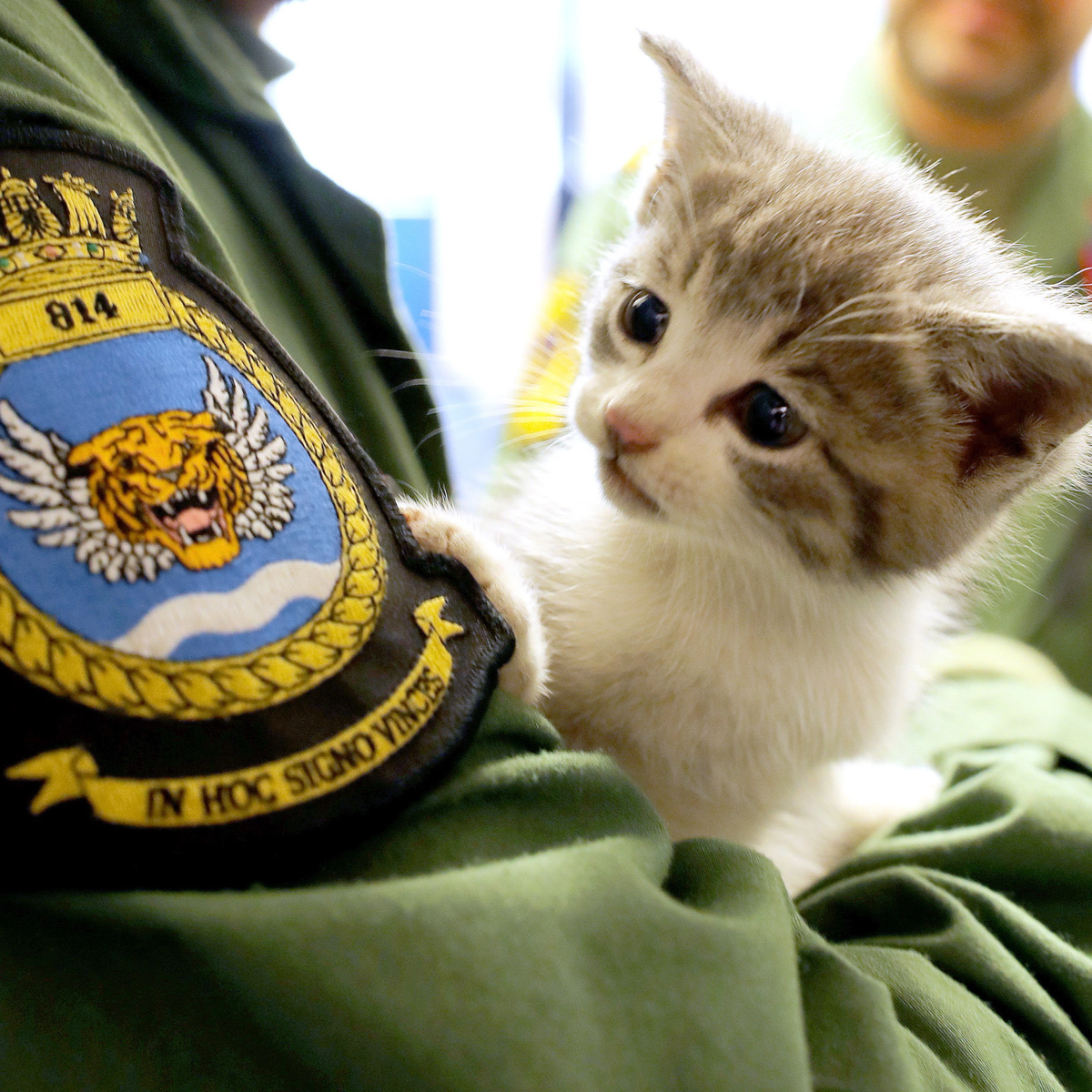 Internet Falls In Love With Pilot Who Saved Kitten After 300 Mile Ordeal SWNS LUCKY KITTEN 04