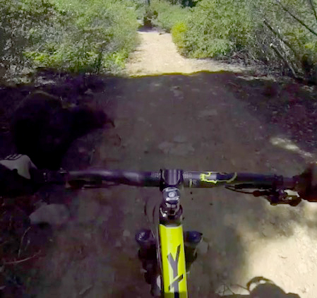 Brutal Head Cam Footage Captures Moment Cyclist Crashes Into Bear bearbike2