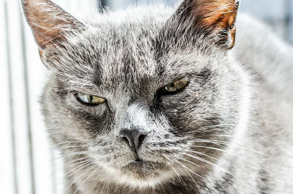 Couple Call Police After Being Held Hostage By Their Own Pet cat1