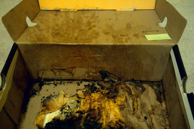 NOPE: This Box Is The Most Hideously Disgusting Thing Ever cumbox 2 640x426