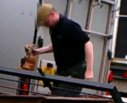 Hideous Video Shows Fox Cubs Being Put In Hunting Dogs Kennel For Training fox hunt 4