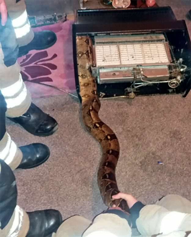 NOPE: Firefighters Wrestle 8 Foot Snake Out Of British Womans Fireplace https 2F2Fblueprint api production.s3.amazonaws.com2Fuploads2Fcard2Fimage2F1309042FSnake fireplace photo4