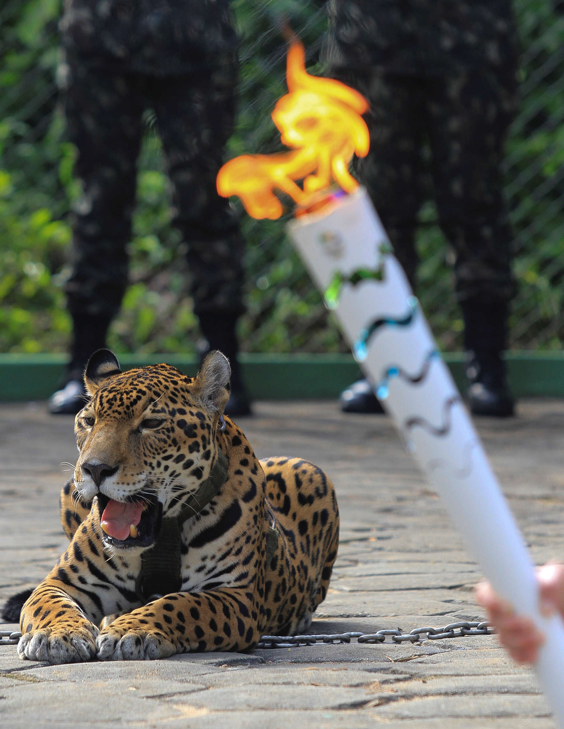 Jaguar Juma is pictured during the Olympic Flame torch relay in Manaus