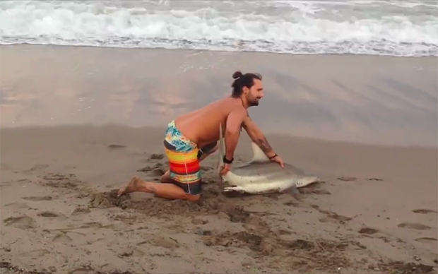 Tourists Kill Shark After Dragging It From Sea Just To Pose For Photos shark florida anim 3579904b