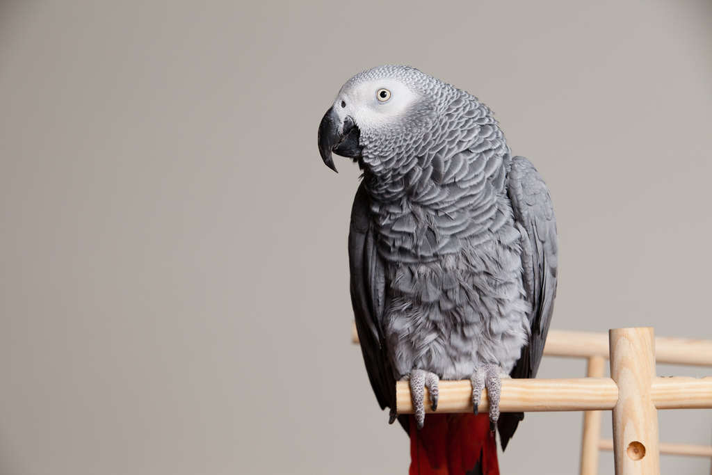 Parrot Who Saw Murder Could Be Actual Witness In Court 8453530769 9bab22d205 b