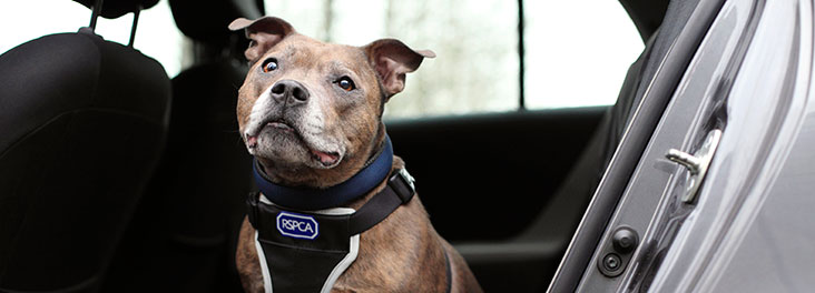 Can You Really Smash A Car Window To Rescue A Dog? DogsHotCars
