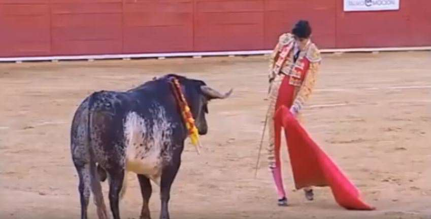 Global Outrage As Story Of Bull Who Killed Matador Reaches New Low bull 1