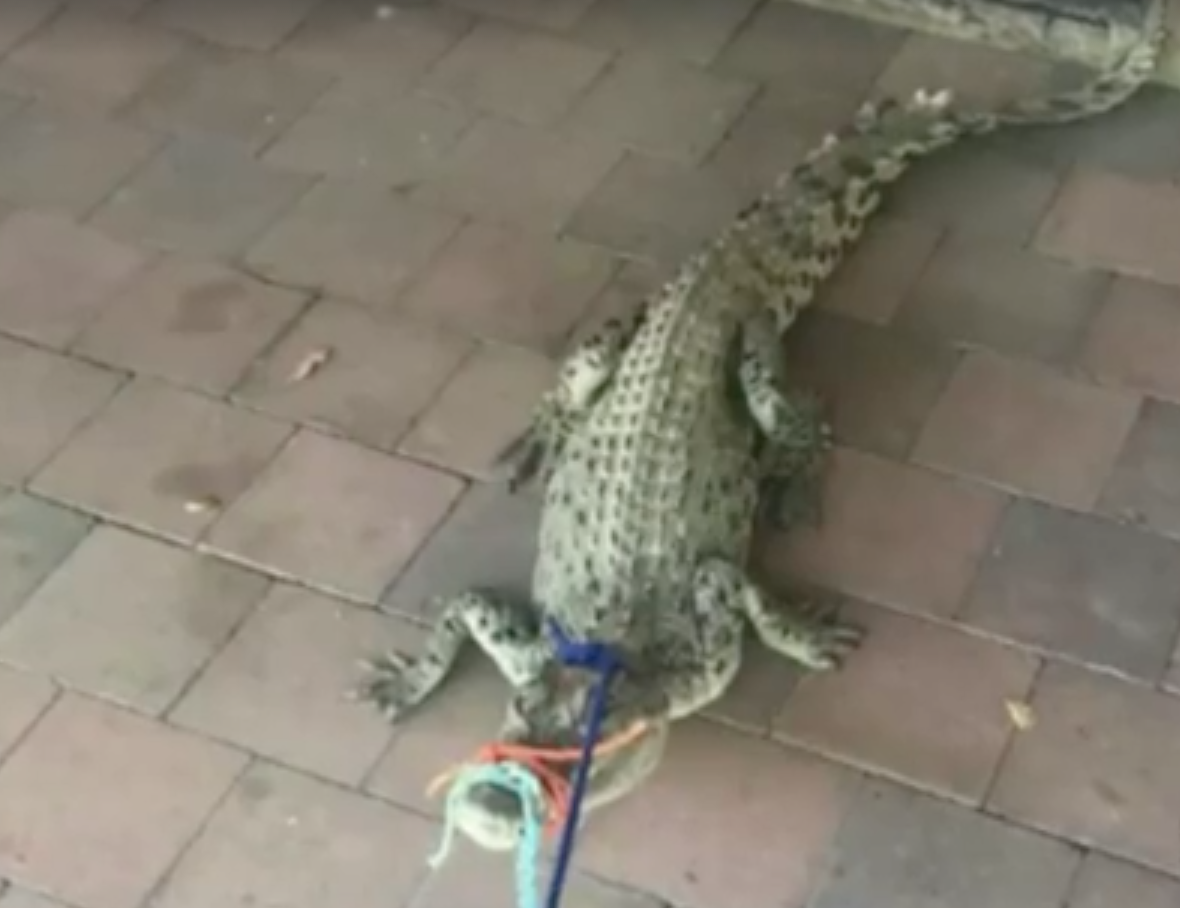 Teenager Wakes Up To Find Terrifying Prank In Her Bathroom croc3