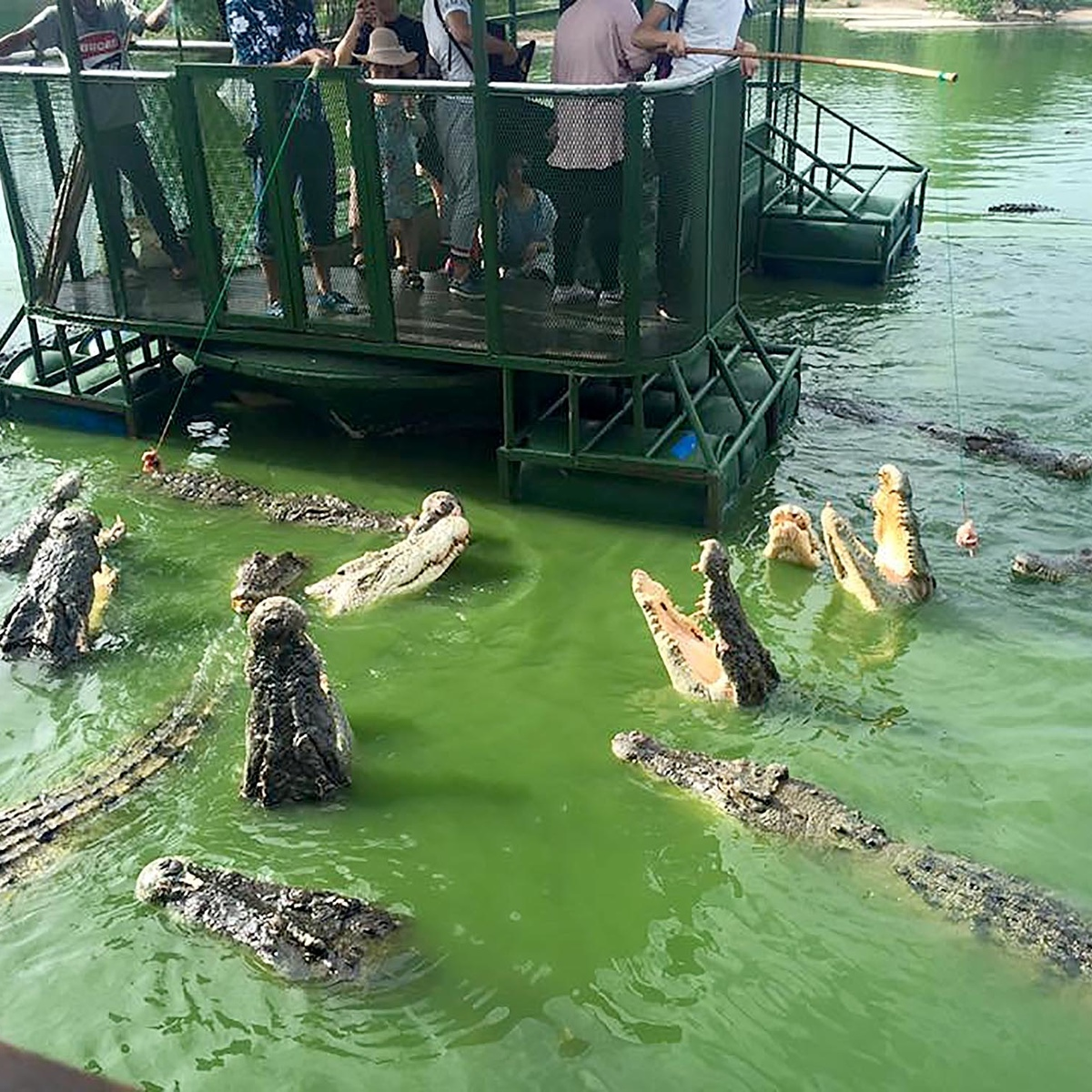 The Worlds Most Terrifying Tourist Attraction Has Been Closed Down crocs1