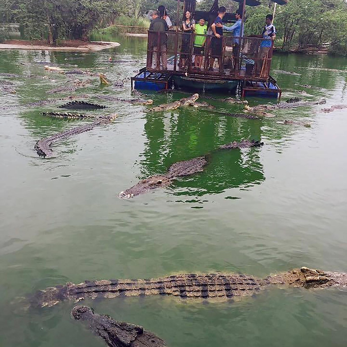 The Worlds Most Terrifying Tourist Attraction Has Been Closed Down crocs3