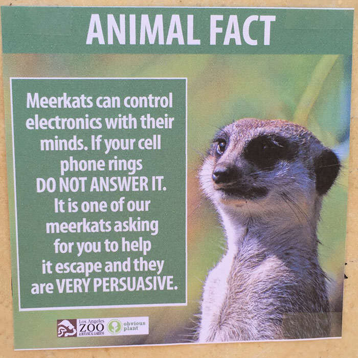 Prankster Brilliantly Trolls Zoo With Made Up Animal Facts funny animal facts fake los angeles zoo obvious plant 4 5776744320022  700