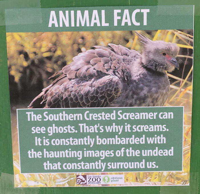 Prankster Brilliantly Trolls Zoo With Made Up Animal Facts funny animal facts fake los angeles zoo obvious plant 5 57767446233fe  700