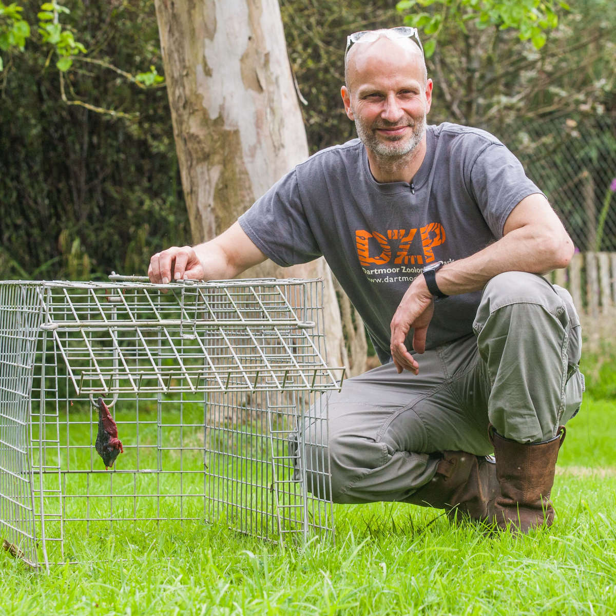 Runaway Lynx Fools Zookeepers With Second Daring Escape lynx44