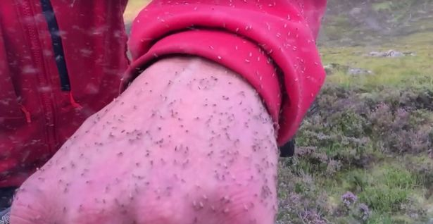 This Video Of A Man Being Swarmed By A Midge Cloud Is Grim As F*ck Highland walker enveloped by cloud of midges
