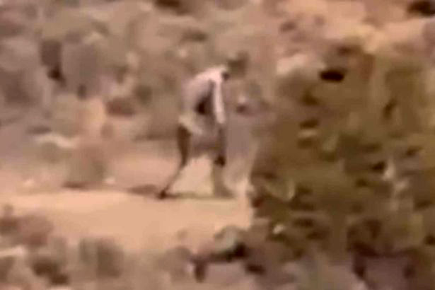 Eerie Video Captures Goat Killing Chupacabra On Film cabra1