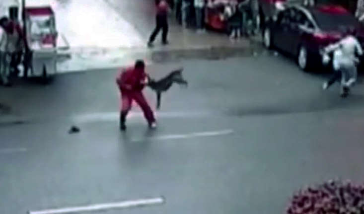 Video Shows Bulldog Attack Over 20 People In Two Hour Rampage dog3