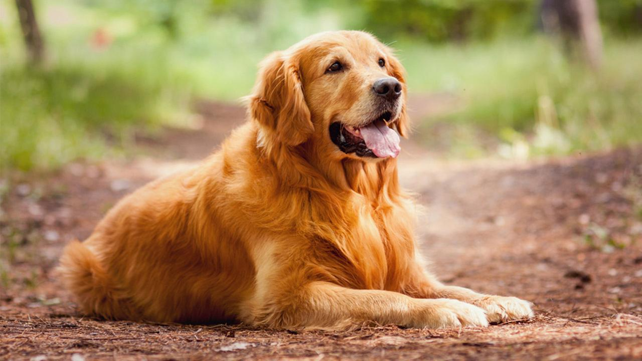 Guy Tries To Comfort Girlfriend After Her Dog Dies, F*cks Up Massively golden1
