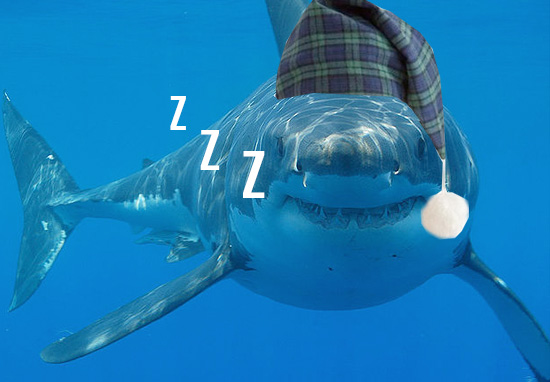 Someone Filmed A Great White Shark Sleeping For First Time shark1