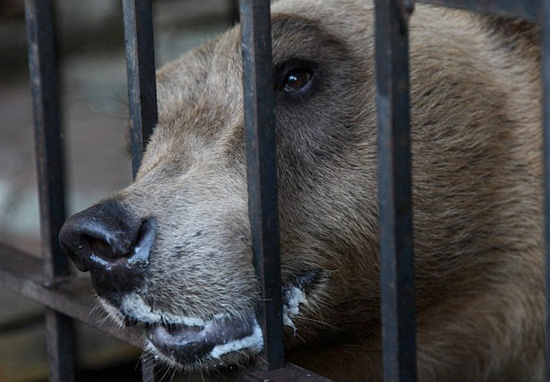 Worlds Saddest Bear Is Finally Freed From Tourist Attraction Hell tomi1