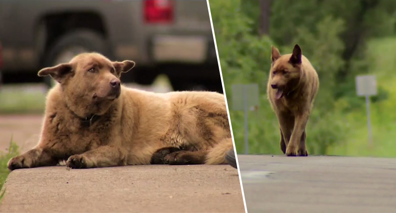 Stray Dog Makes Epic Journey Every Day To See Mates, Becomes Town Ambassador BrunoDogFB