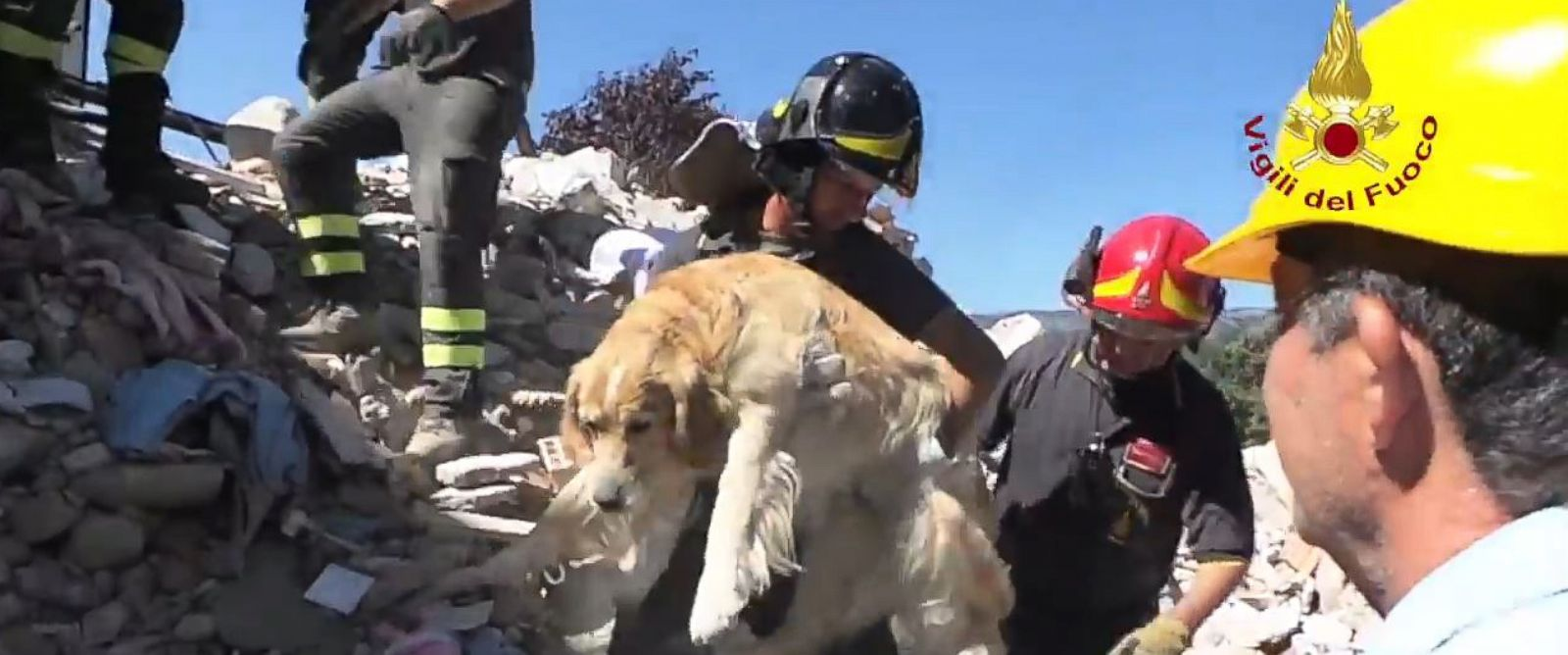 Dog Rescued Italy Earthquake