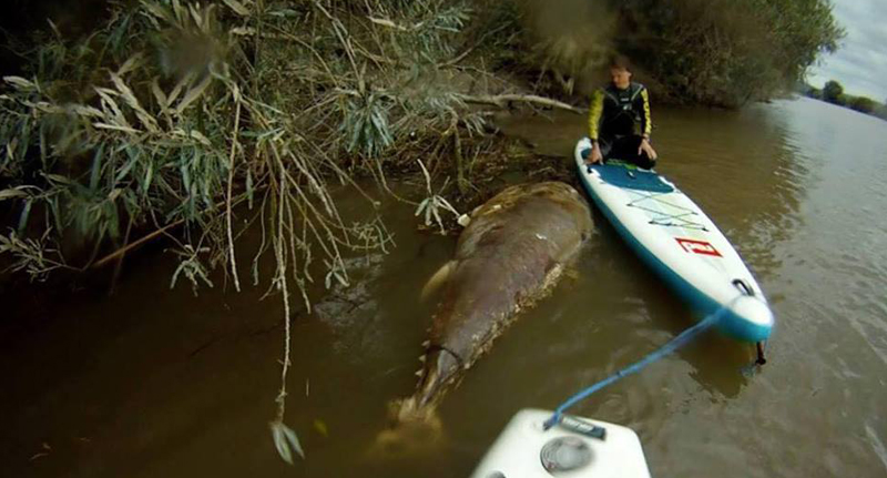 Seven Foot Sea Monster Caught In Gloucestershire River SeaMonsterFB
