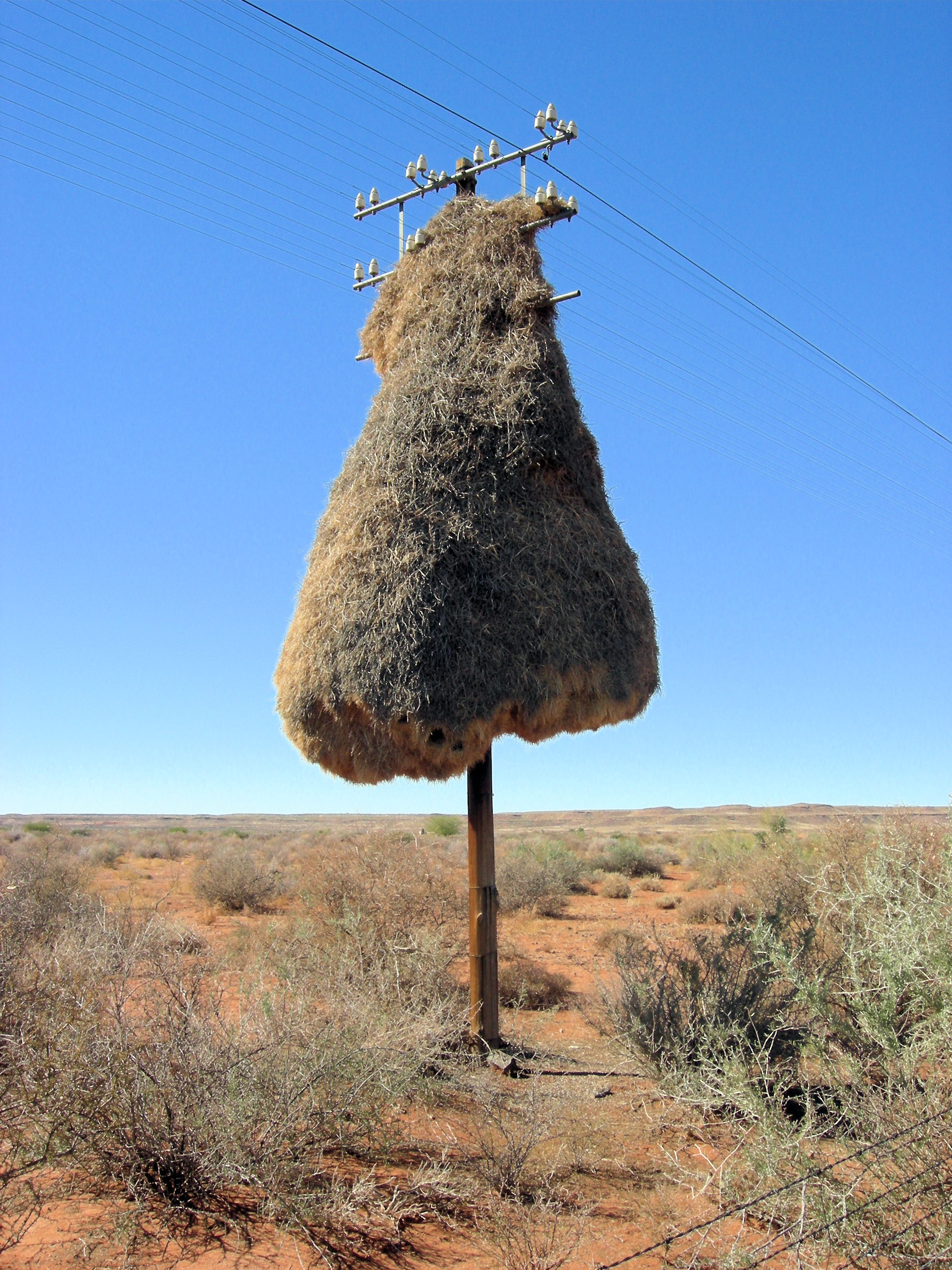 Terrifying Ways Creatures Are Evolving Just To F*ck With Us Weaver Birds Nest