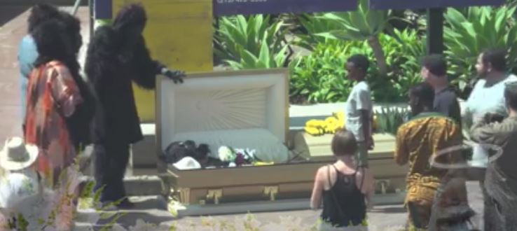 Someone Has Just Live Streamed A Fake Harambe Funeral harambe