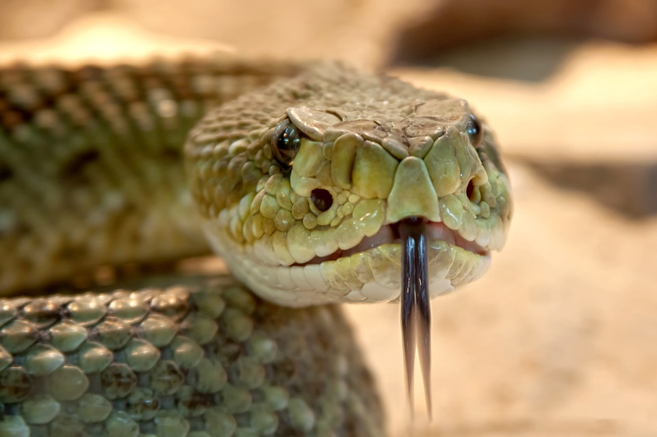 Terrifying Ways Creatures Are Evolving Just To F*ck With Us rattlesnake 653642 960 720