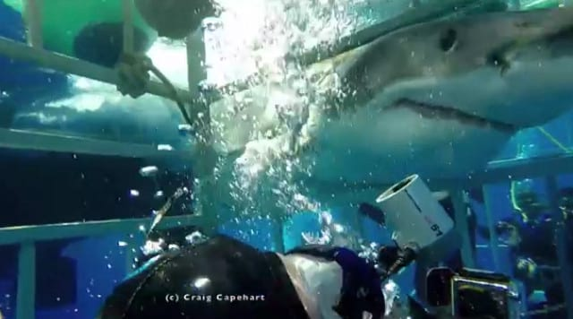 Terrifying Footage Shows Moment Great White Breaks Into Diving Cage 14104UNILAD imageoptim shark8