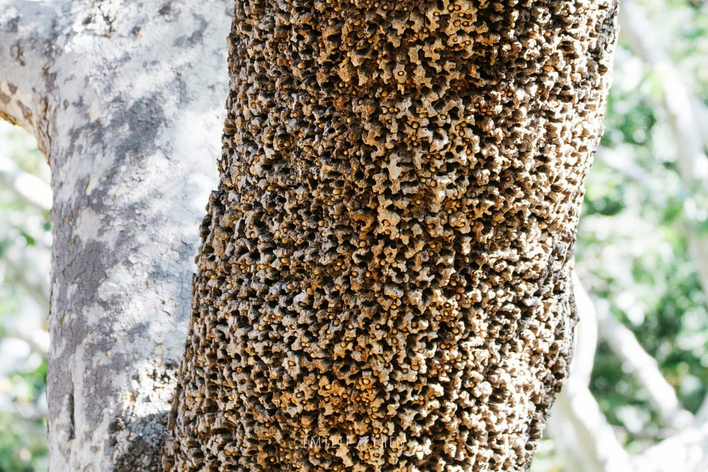 Trypophobia Is The Terrifying Phobia You Didnt Know You Had 2282UNILAD imageoptim trypophobia woodpecker tree