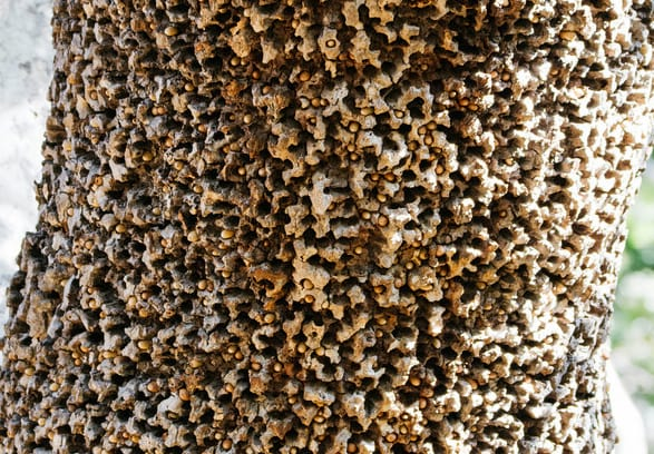 Trypophobia Is The Terrifying Phobia You Didn T Know You Had