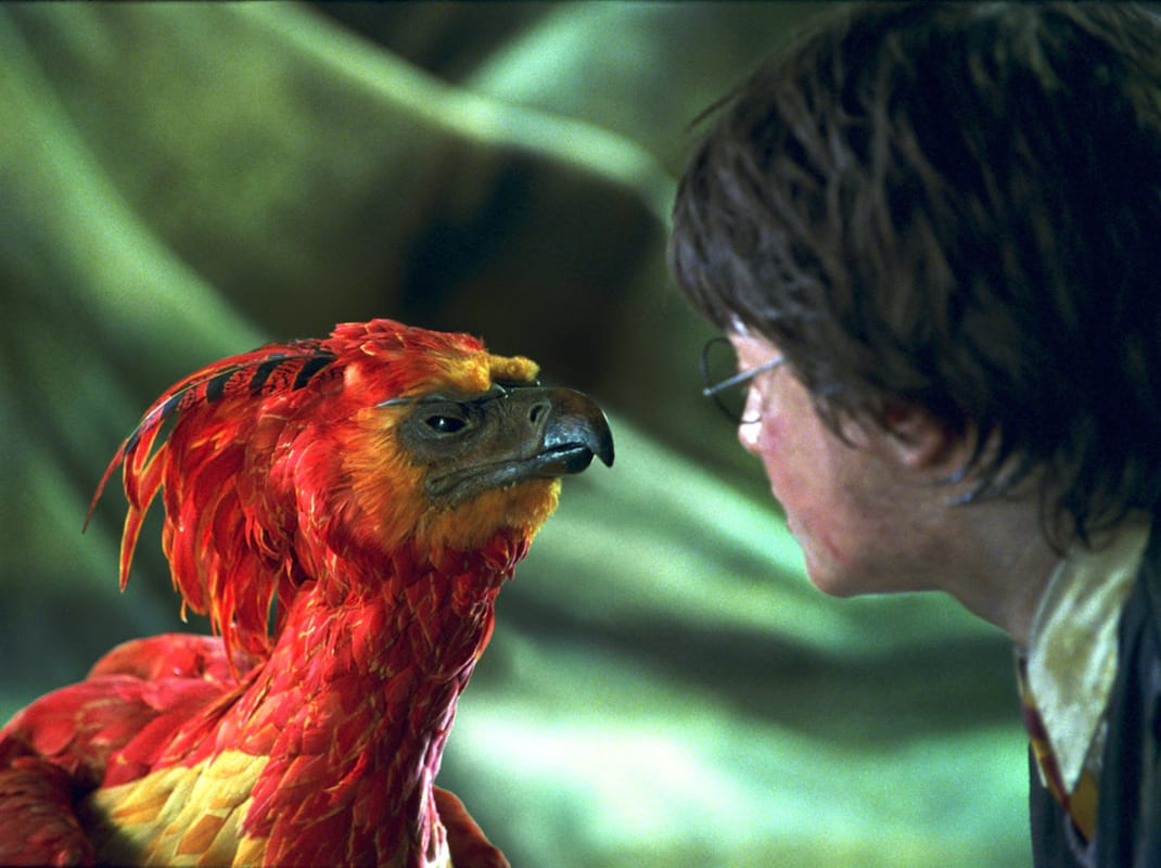 This Harry Potter Fan Theory About Fawkes May Blow Your Mind 28350UNILAD imageoptim Fawkes WB F2 FawkesMeetingHarryPotter Still 100615 Land