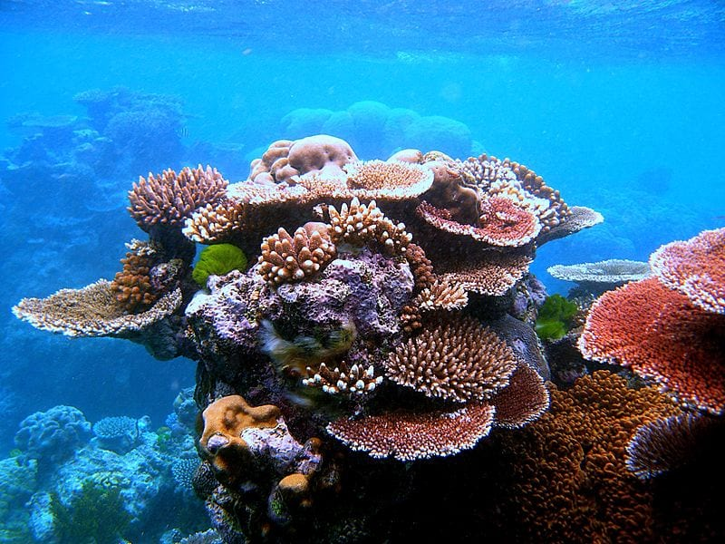 The Great Barrier Reef Has Been Pronounced Dead 28752UNILAD imageoptim Coral Outcrop Flynn Reef
