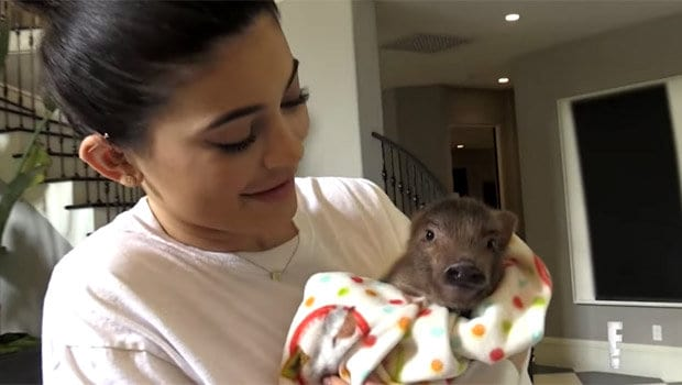 Kylie Clears Up Her Confusion Between A Chicken And Pig 36911UNILAD imageoptim Kylie Jenner and the pig 686217