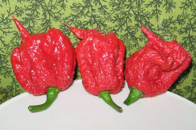 carolina_reaper_pepper_pods-640x426
