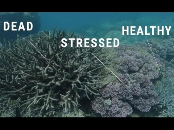 The Great Barrier Reef Has Been Pronounced Dead 40995UNILAD imageoptim deadstressedhealthycoral