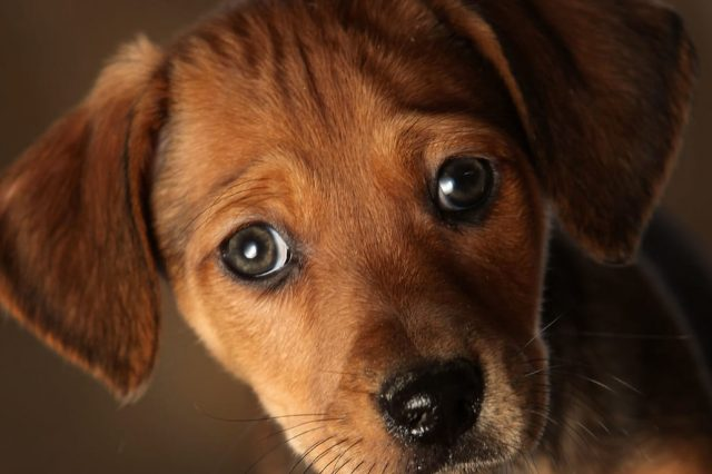 Animal Shelter Accused Of Killing 2,000 Cats And Dogs Slowly And Painfully 13941UNILAD imageoptim GettyImages 95573020 640x426