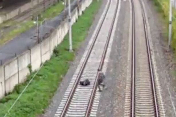 two-boys-lie-down-on-tracks-in-front-of-fast-moving-train-1